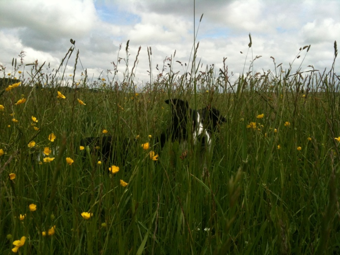 Lilly hiding in the Meadow