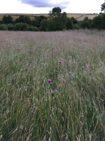A field near the estate, free of chemicals, look at the result.