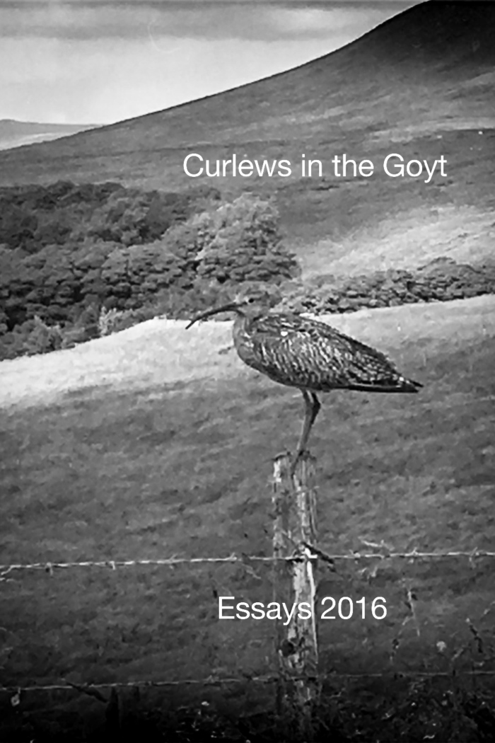 Curlew_Essay-Page